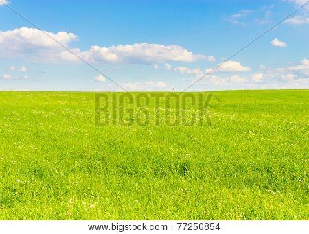 Field Grass Area