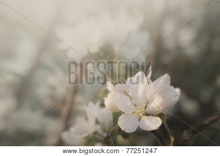 Flower on tree in spring in bloom