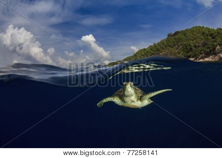 Green Sea Turtle and tropical paradise island