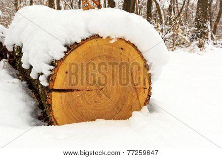 Log under snow in forest