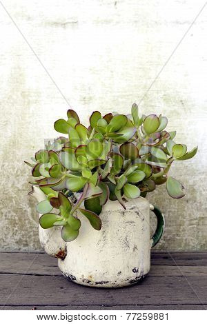 Succulent plant in old kettle