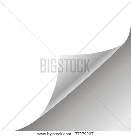 white paper background vector