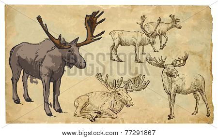 Animals, Theme: Reinder - Hand Drawn Vector Pack