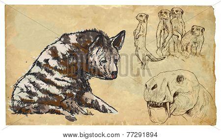 Animals, Theme: Feliformia - An Hand Drawn Vector Pack