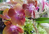 picture of lilas  - orchids in a flower arrangement vivid lila colors - JPG