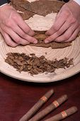 picture of tobacco leaf  - Selective focus on the process of making cigars from dried up leaves of tobacco plant - JPG