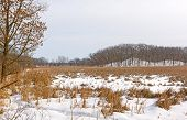 picture of marshlands  - Marshland and Hills in Winter Colors in Moraine Hills State Park in Illinois - JPG