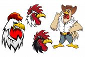 image of roosters  - Cartoon roosters or cocks charcters for mascot ot agriculture design - JPG