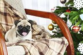 pic of christmas dog  - Funny - JPG