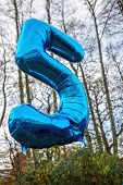 picture of helium  - Blue helium balloon 5 today in the woods - JPG