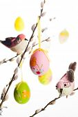 picture of pussy-willows  - Easter colored eggs and birds on  pussy willow branches - JPG