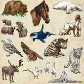 Постер, плакат: Animals Around The World set No 11 Hand Drawn Illustrations