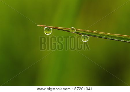 Grass  Leaves Green With Dew Drops