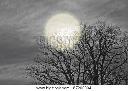 Night Moon Shines Through The Clouds And Trees.