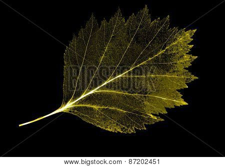 light leaf skeleton isolated on black background