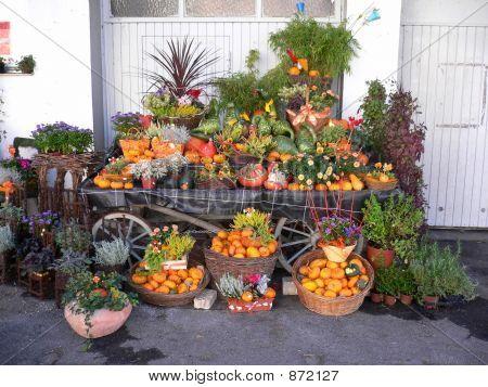 Pumpkin Four