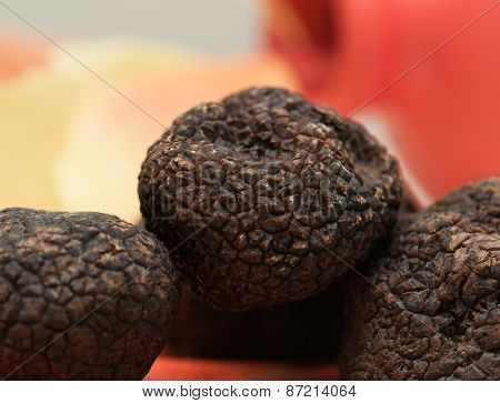 Mushrooms Black Truffle On A Red-yellow Blurred Background