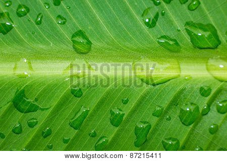 Vibrant Droplets Over Freen Leaf After A Rain.