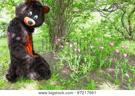 actor dressed as bear savors tulips against the background of green bushes
