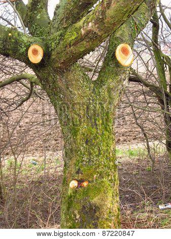 funny annoyed tree