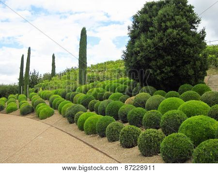 Topiary landscape design