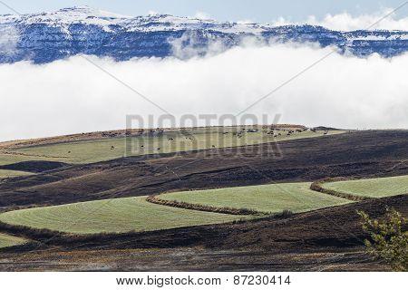 Mountains Snow Cattle Landscape