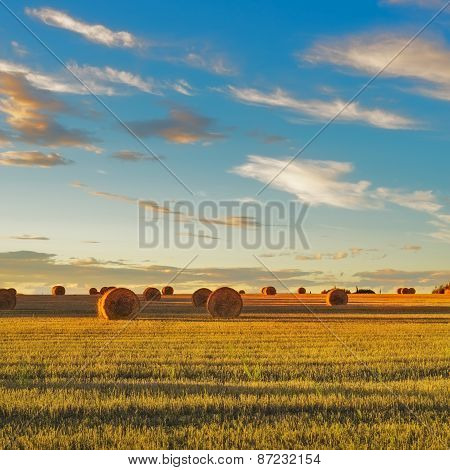 Hay Rolls And Harvested Field At Sunset. Tuscany