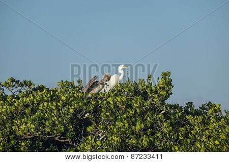 Birds on Mangrove Tree