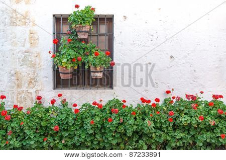 White Wall And Red Flowers