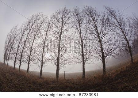 Trees Line Mist Curved