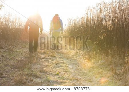 Full length rear view of male hikers walking together in field