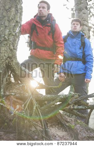 Young male backpackers in forest