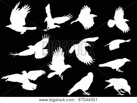 illustration with set of twelve crow silhouettes isolated on black background