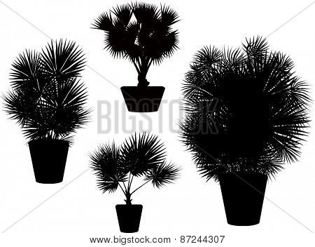 illustration with four black palm trees in pots isolated on white background