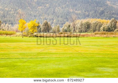 Idyllic Golf Field
