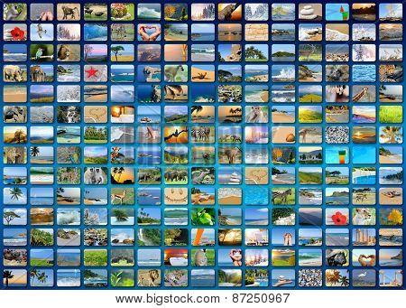 Nature Photo (animal, Landscape, Beach)