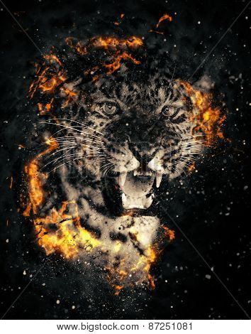 Leopard In Fire
