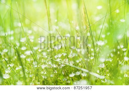 Wildflowers And Green Grass In A Field