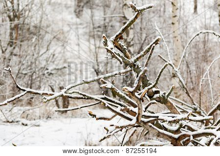 Dry and fallen tree in the forest