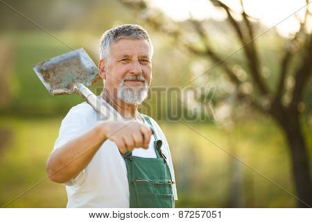 Portrait of a handsome senior man gardening in his garden, on a lovely spring day (color toned image)