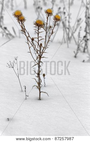 Herbs in winter field, wite, herb, plant, nature