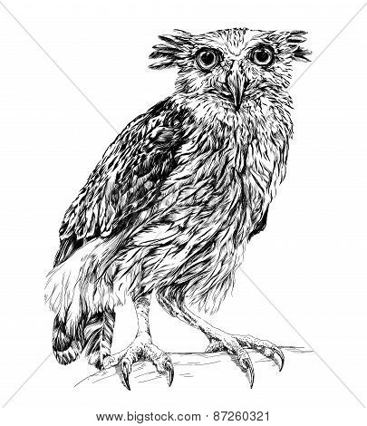 Sketch of owl. isolated on white vector illustration