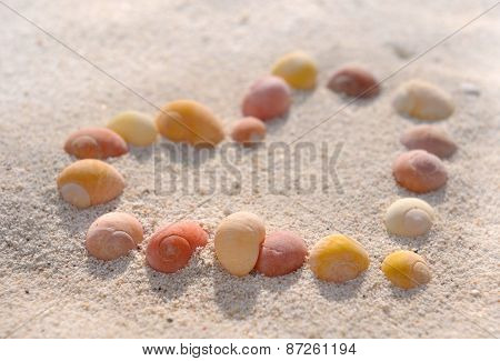 Seashells Heart
