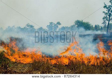 Straw fire