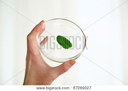 Woman holding Petri dish with green leaf, close up