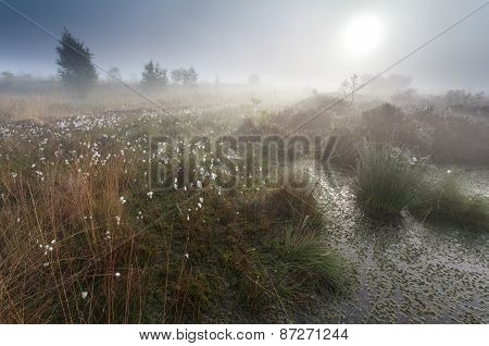Misty Summer Sunrise On Swamp