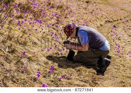 Tourist Takes Photos Of Crocuses