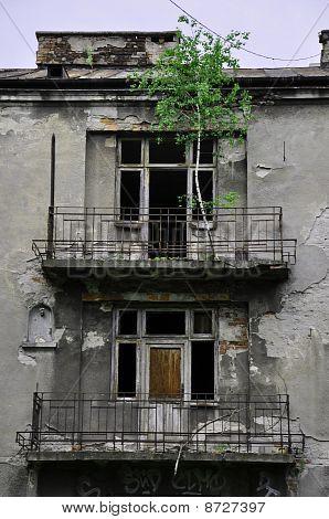Baum auf dem alten Balkon