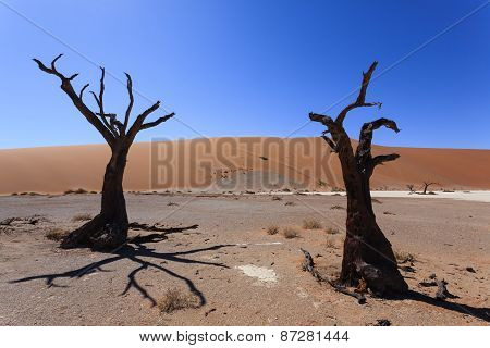 Death Tree Hidden Vlei