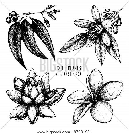 Exotic Plants Vector Collection